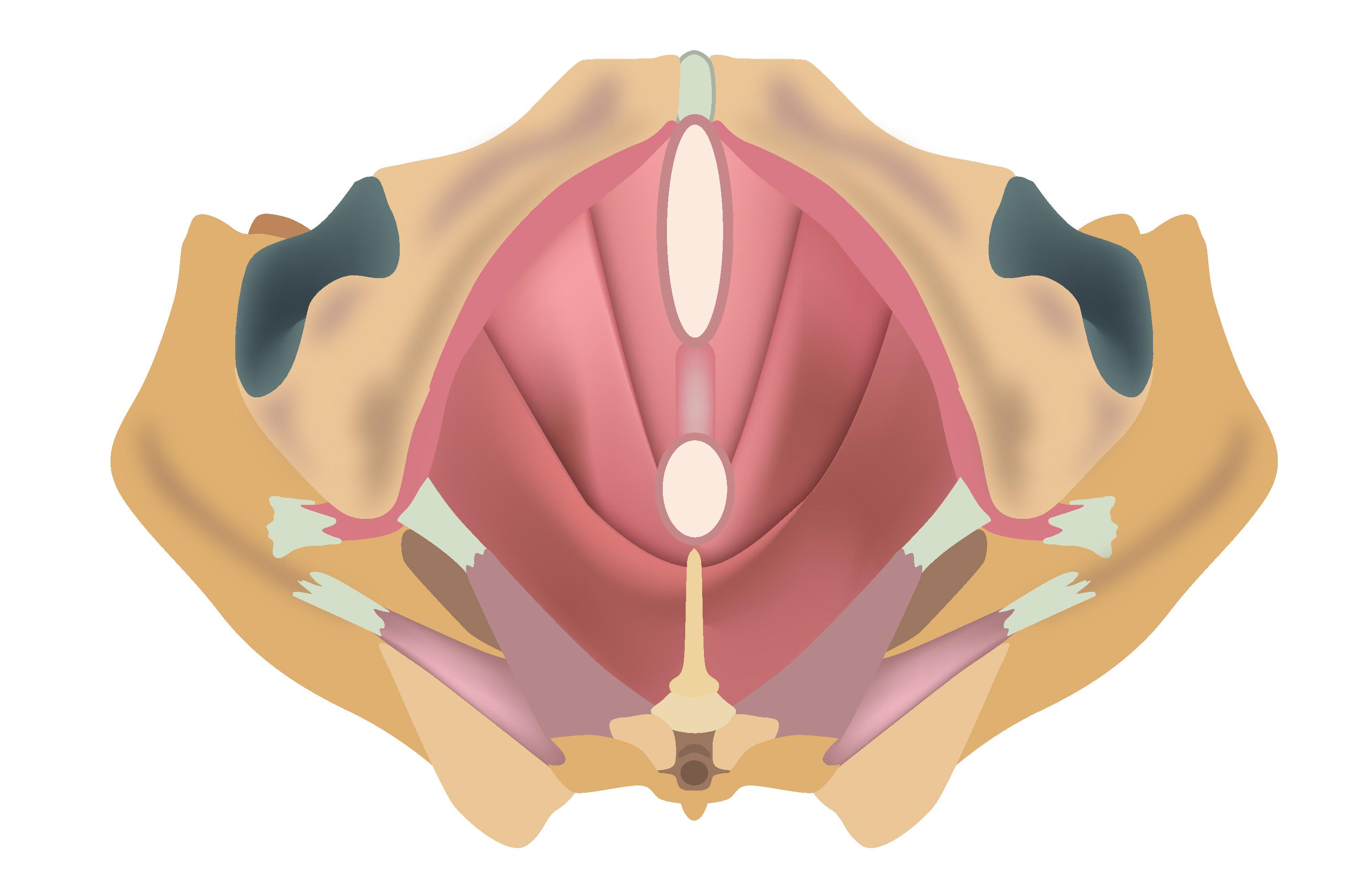 Anatomie und Wahrnehmung